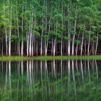 Lakeshore Panorama (Multi-Panel Right - 3 of 3) by David Kocherhans