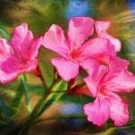 """Oleander Dream"" by DBenoit"