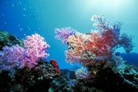 Soft Corals Deep