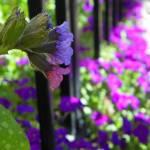 """""""Spring Garden"""" by vpicks"""