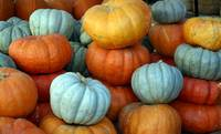 Pumpkins in Pastel