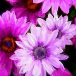 """beautiful flowers"" by ArtbySachse"