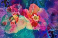 Impatiens Abstract
