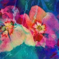 Impatiens Abstract Art Prints & Posters by Deborah Benoit