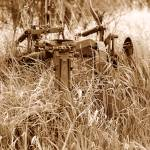 """Antique Plow Overgrown in a Field"" by rhamm"