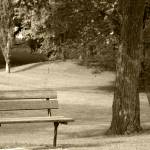 """""""2015-03-17 Sepia park bench in a  park"""" by rhamm"""
