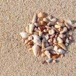 """Seashells on sand"" by Mohamed-Fadly"
