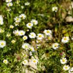 """flowers"" by juvygreen"