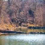 """pond4_a"" by juvygreen"