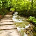 """Wooded Path"" by raetucker"