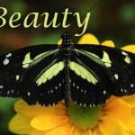 """""""Beauty"""" by rhamm"""