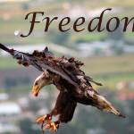 """Freedom"" by rhamm"