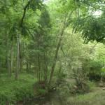 """""""Serene Landscape"""" by gilbertsphotographyprints"""