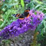 """""""Butterfly"""" by sharonpattersonsart"""