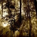 """Morning MIst"" by SerenicArt"