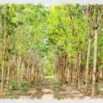 """""""Natural rubber trees water color"""" by Ofer"""