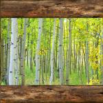 """Cabin_Window_View_Into_The_Woods"" by lightningman"