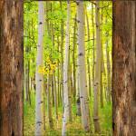 """Rustic_Cabin_Window_Into_Woods_Portrait_View"" by lightningman"