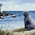 """bouvier des flandres beach"" by k9artgallery"