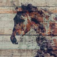 Fire Horse 2 Art Prints & Posters by Irena Orlov
