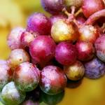 """""""Golden Grapes"""" by AnneVis"""