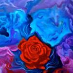 """Bursting Rose"" by jennylee"