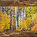 """Colorful Aspen Forest Rustic Cabin Window View"" by lightningman"