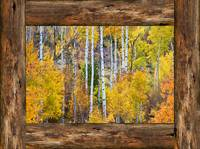Colorful Aspen Forest Rustic Cabin Window View