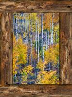Colorful Forest Rustic Cabin Window Portrat View