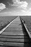 Dungeness boardwalk