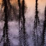 """Lake reflecting Trees at sunset"" by StevenRichards"