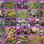 """Spring Desert Collage"" by Groecar"