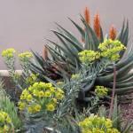 """Plant Life"" by GordonBeck"