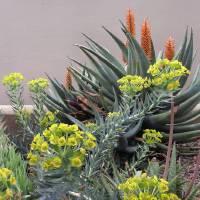 Plant Life Art Prints & Posters by Gordon Beck