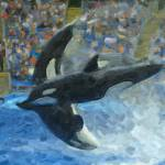 """""""Killer Whale 1"""" by GregB"""
