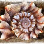 """""""Shell 1"""" by GregB"""