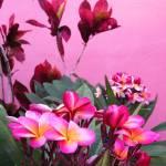 """Plumeria and Croton"" by joeyartist"