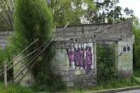 Overgrown Dilapidated Building