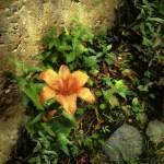 """Bright Spot"" by RCdeWinter"