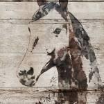 """""""Picolino Horse"""" by Aneri"""
