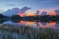 Dawn in the Everglades