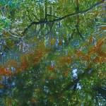 """Florida Wetland Reflections"" by spadecaller"