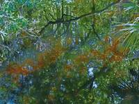 Florida Wetland Reflections