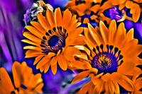 Orange Floral Abstract