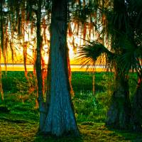 Sunset Through Spanish Moss Art Prints & Posters by Jason Knight