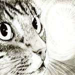 """Fairy Light - Tabby Cat Drawing"" by tigerpixie"