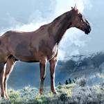 """Wild Horse on the Ridge"" by ElainePlesser"