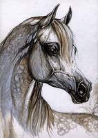 portrait of an arabian horse