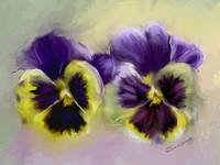 PANSY PALS