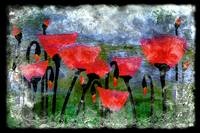 26a Abstract Floral Red Poppy Digital Painting